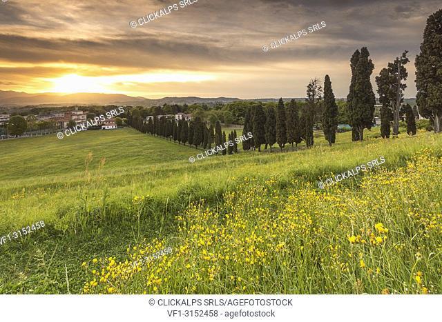 Dramatic sunrise on Viale dei Cipressi, Inverigo, Brianza, Como province, Lombardy, Italy, Europe