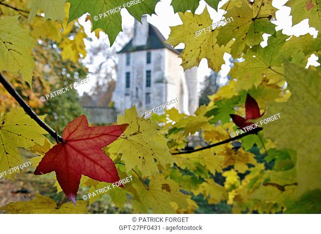 MAPLE AND SYCAMORE LEAVES IN AUTUMN, THE CHATEAU AND ARBORETUM OF HARCOURT, EURE 27, FRANCE