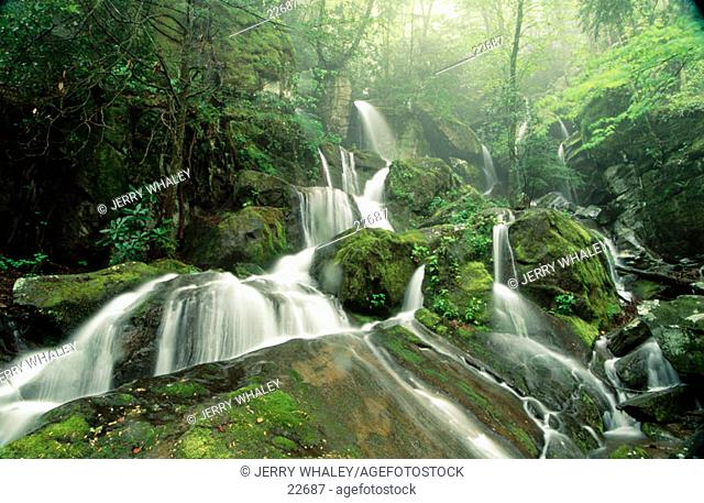 Cliff Branch Falls. Great Smoky Mountains NP. Tennessee. USA