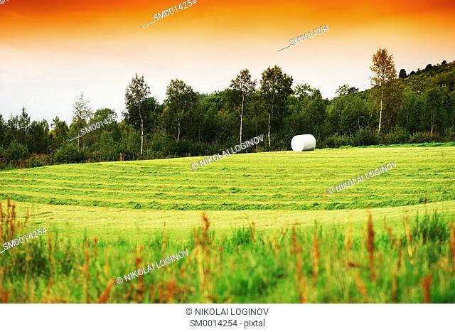 Packed haystack on Norway field background hd