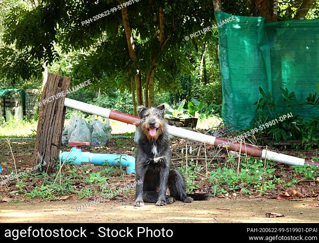 27 October 2019, Thailand, Ko Mak: A stray dog is sitting on the side of the road. The island is about 16 square kilometers and is located in the eastern Gulf...