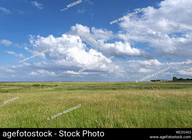Landscape with salt marshes, in the background the Bremerhaven container terminal, Fedderwardersiel, Lower Saxony, Germany, Europe