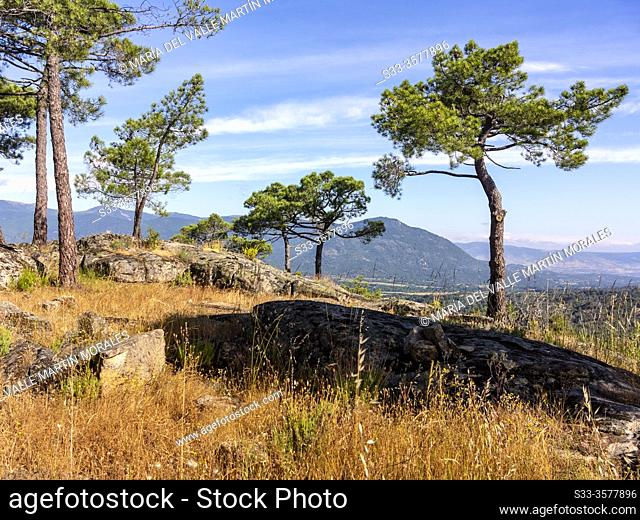 Guisando peak in Sierra de Gerdos from The Piquillo pinewood in Cadalso de los Vidrios. Madrid. Spain. Europe