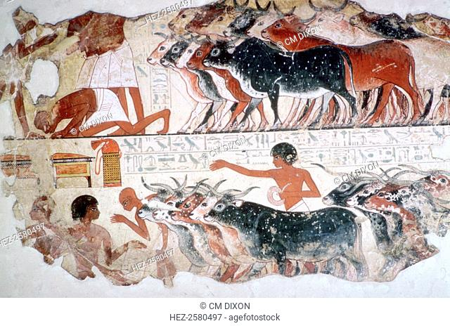 Egyptian wall-painting of the inspection of cattle from the tomb of Nebamun at Thebes