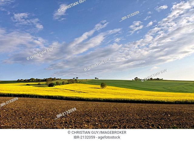 Agricultural landscape, rape field, Puy de Dome, Auvergne, France, Europe