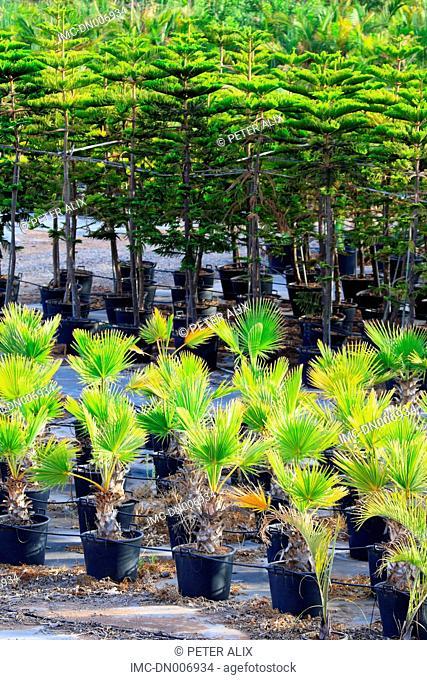 Spain, canary islands, Gomera, plants