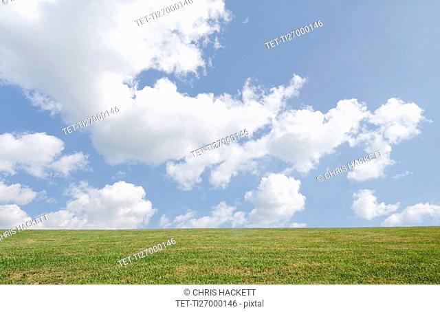 Field of grass and sky