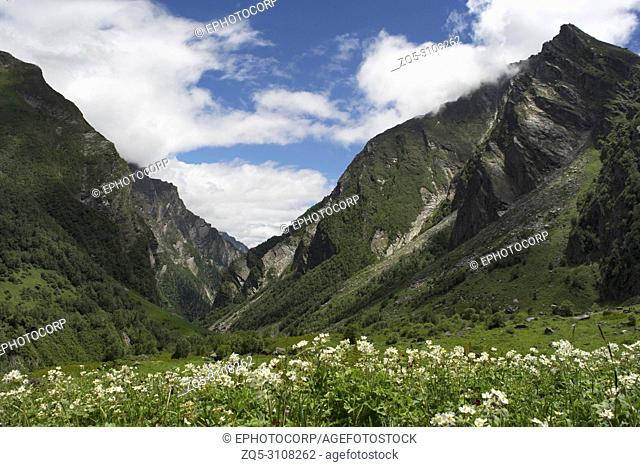 Landscape with mountain backdrop, Valley of Flowers, Uttarakhand, India