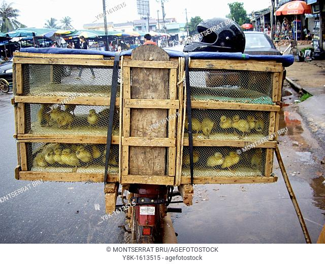 Ducklings cage on motorbike at Koh Kong market, Cambodia