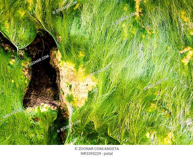 rock with seaweed