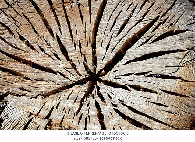 Clefts on Wood  LLeida, Spain