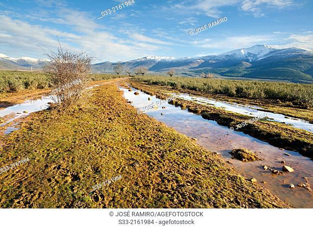 Muddy road in the Sierra Norte. Espinar. Guadalajara. Castilla la Mancha. Spain