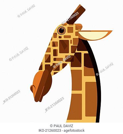 Close up of giraffe looking at camera