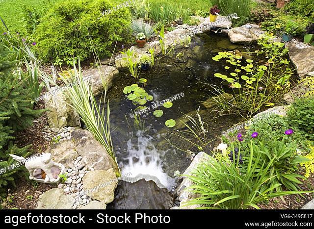 Nymphaea - Waterlily pads, Acorus calamus 'Variegatus, Sagittaria latifolia 'Duck potato' - Arrowhead in rock edged pond with waterfall bordered by Hemerocallis...