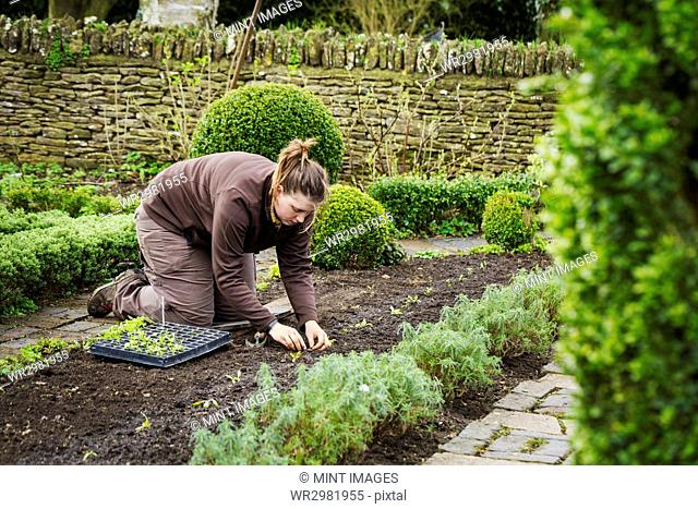 Woman planting seedlings in a bed of soil in a kitchen garden