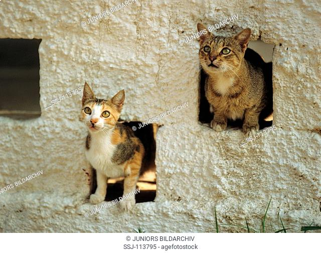 two alley cats looking through holes in wall