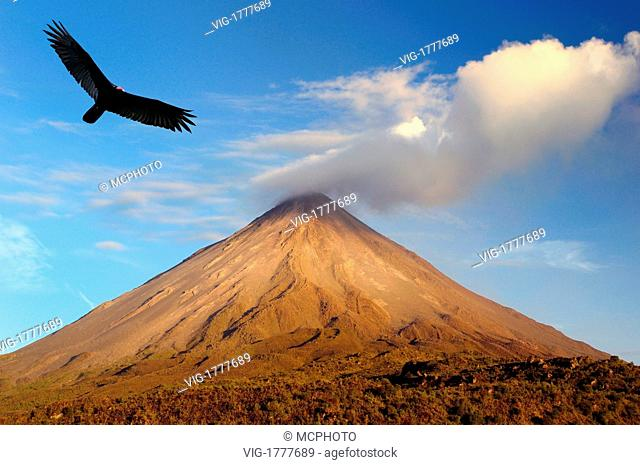 Turkey vulture soaring at active Arenal Volcano Costa Rica at sunset - 10/03/2008