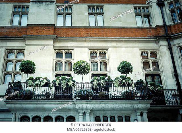 box balls and green decoration in front of a house facade in London