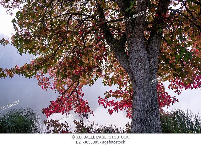 France, Nouvelle Aquitaine, Dordogne, Dordogne river in autumn, by Domme