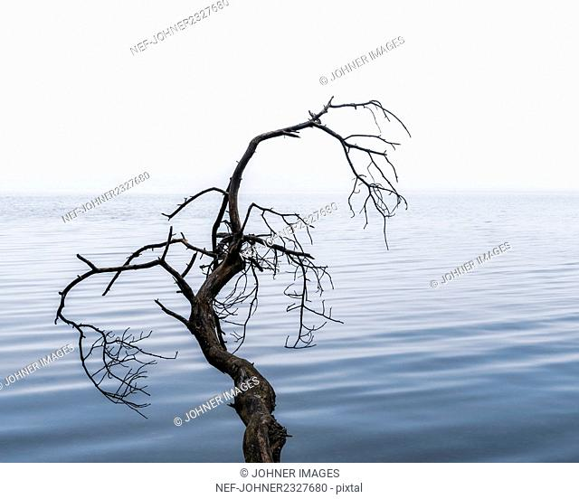 Branch at lake