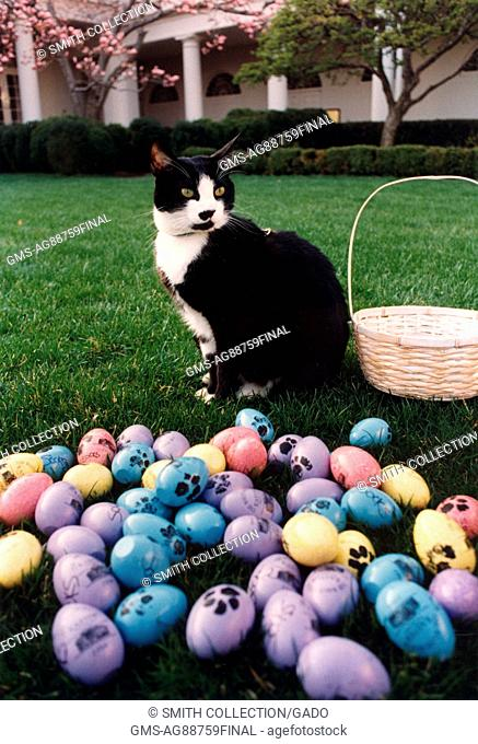 Socks the Cat, the First Pet of President Bill Clinton and First Wife Hillary Rodham Clinton, with black fur, white face, red collar, and amber eyes