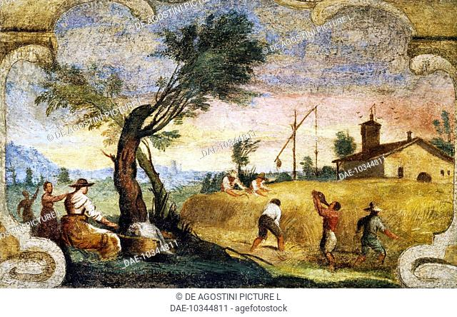 The harvesting, fresco by Giovanni Francesco Barbieri, known as il Guercino (1591-1666).  Cento, Pinacoteca Civica (Art Gallery)