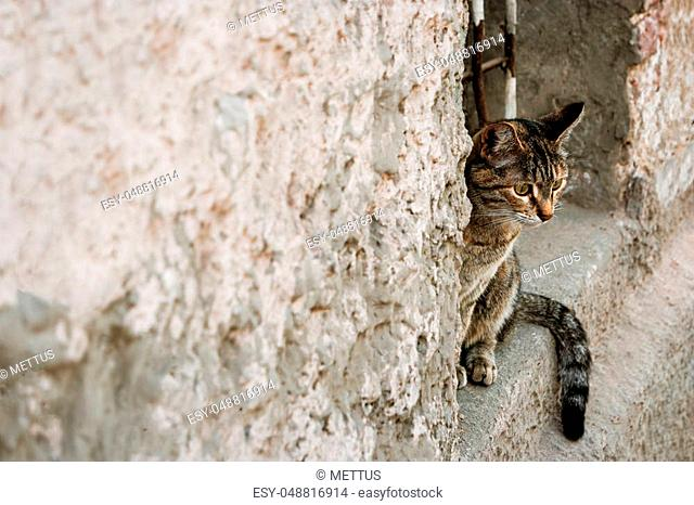 Calico cat peeking out of a window opening, a lot of space for text