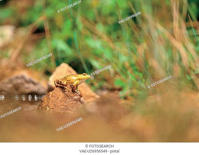 tree frog, animal, green frog, nature, frog, film