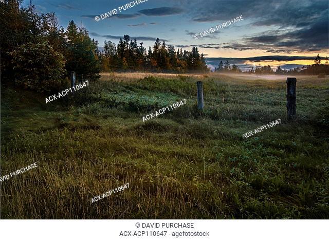 Mist Field at day break Deer lake