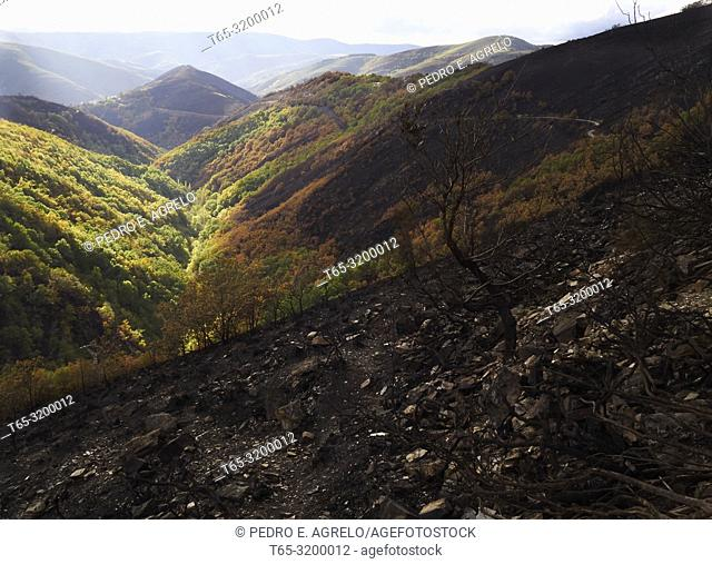 Lugo, Ancares, Cervantes.- Forest Fire Natural Reserve Galicia.- The San Martin de Cereixedo mountain and other natural spaces of the Biosphere Reserve