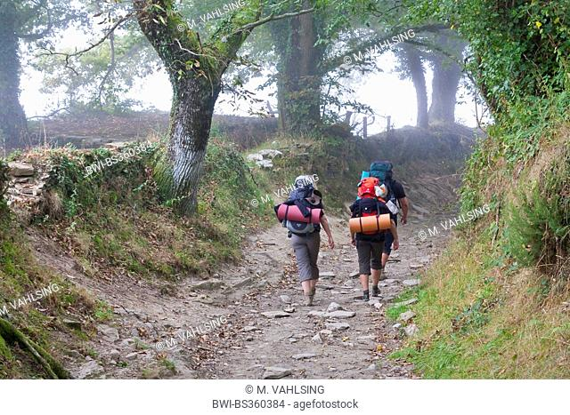 Way of St. James, pilgrims on their way from Montán to Fontearcuda in morning mist, Spain, Galicia, Lugo