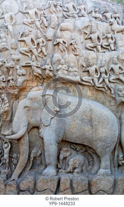 India - Tamil Nadu - Mamallapuram - elephant sculpture at Arjuna's Penance