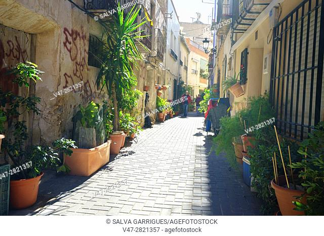 Typical street decorated with plants in the town of Ojos, Murcia, Spain, Europe