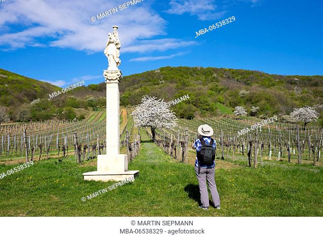 Marterl Mother of God with child from 1710, cherry flower, Donnerskirchen, Leitha Mountains, north Burgenland, Burgenland, Austria