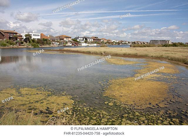 View of shallow saline lagoon habitat situated on coastal marshland formed by sediments deposited by River Adur, Widewater Lagoon, Shoreham-by-sea, West Sussex