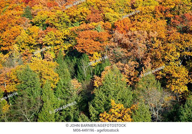 Fall foliage along the Connecticutt River near Turners Falls, Massachusetts. USA