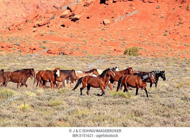 Herd of mustangs, Monument Valley, Utah, United States