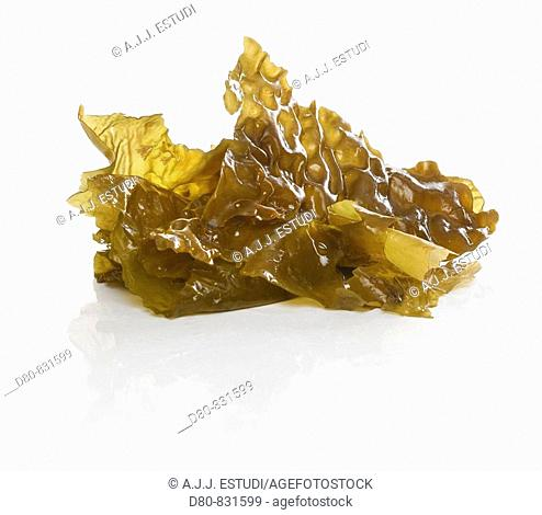 alga reflection on a white background