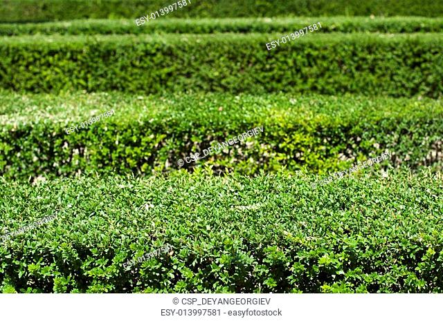 Green background of garden shrubs