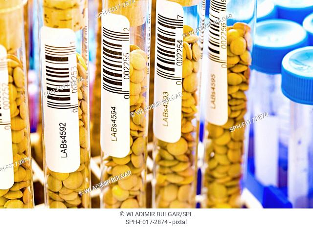 Lentils in test tubes in the laboratory