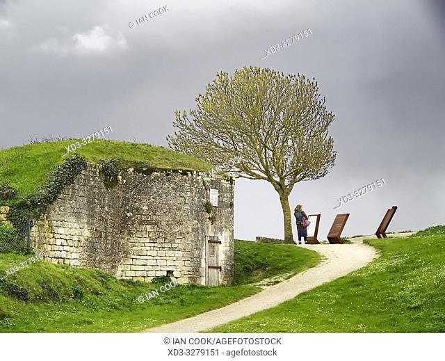 Lâ. . arbre de Richelieu, tree of Richelieu, La Citadelle, Ile dâ. . Oleron, Charante-Maritime Department, Nouvelle Aquitaine, France