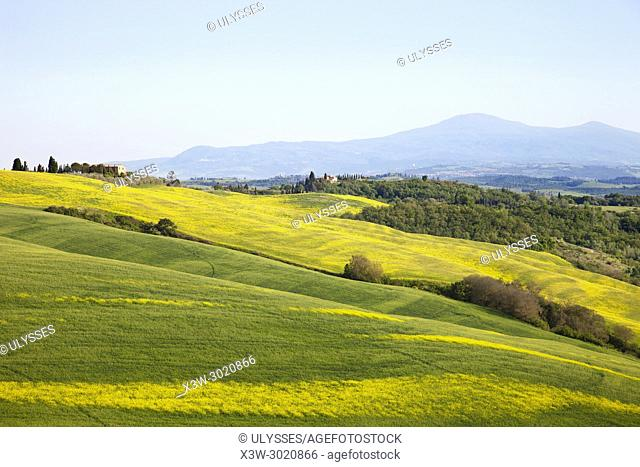 Landscape of the Val d' Orcia with the Amiata mountain, province of Siena, Tuscany, Italy, Europe