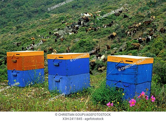 painted wooden beehives in the contryside, Argolid, Peloponnese, Greece, Southern Europe