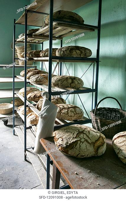 Rye loaves on shelves in a bakery