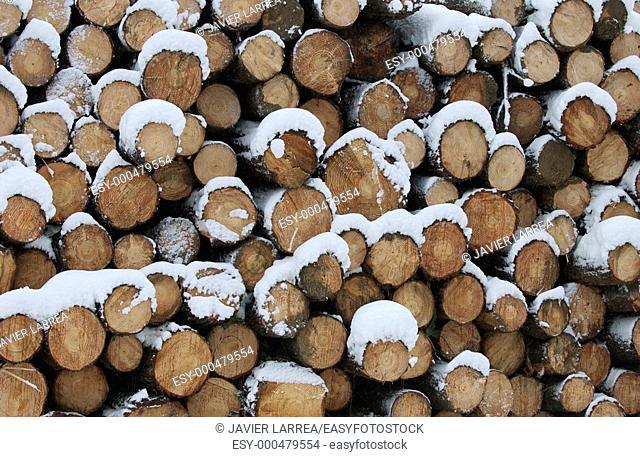 Snowy pine logs. Sierra de Aitzkorri. Gipuzkoa Province. Basque Country. Spain