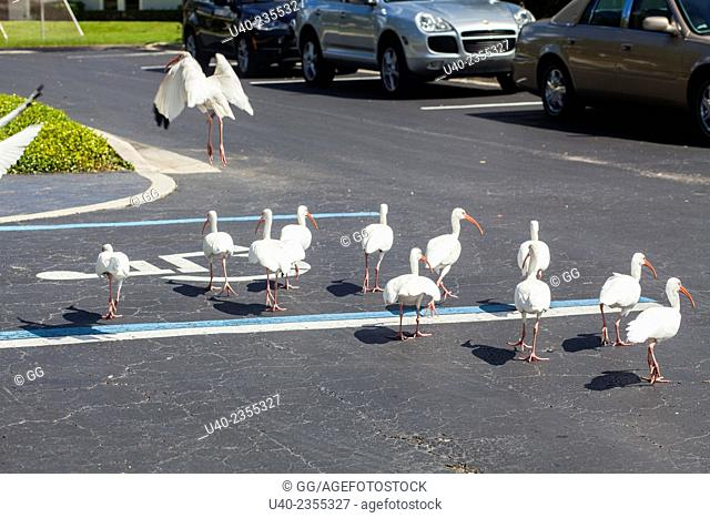Birds walking in parking lot