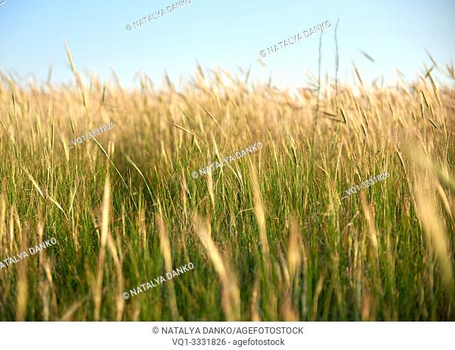 wild steppe on a summer day, Ukraine, Kherson region, selective focus