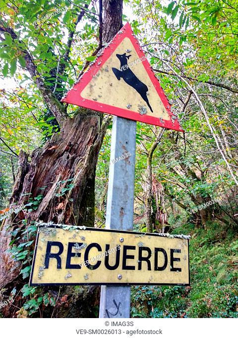 Deer Road Warning Sign, Piloña, Asturias, Spain