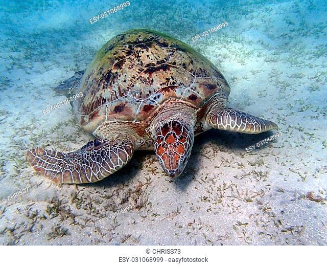 amazing red sea snorkeling