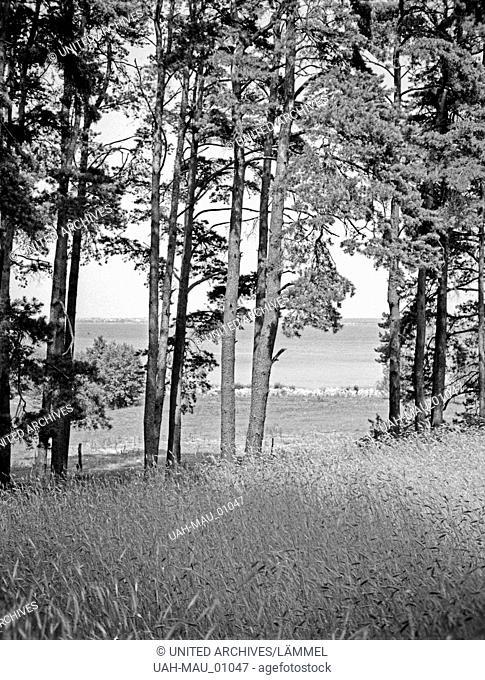 Am Saitensee in Masuren, Ostpreußen, 1930er Jahre. At Saitensee lake in Masuria, East Prussia, 1930s